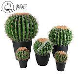 树猫仿真仙人球网红沙漠仙人球仿真多肉热带植物室内假花装饰摆件;