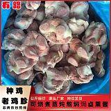 鸡肉调理原料老鸡胗_冷冻生品鸡副分割老鸡胗_餐饮食材质量可靠;