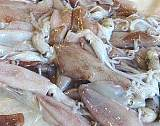 供應進口冷凍水副產品魷魚 鱈魚價格 帶魚生產商;