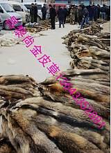 秦皇島市皮草貿易有限公司—網站*頁;