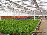 连栋薄膜温室 西安销售温室大棚 大棚塑料薄膜优;