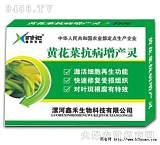 黄花菜叶斑炭疽特效最新产品