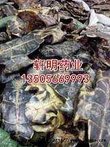 供应龟板 龟板粉 醋龟板 制龟板;