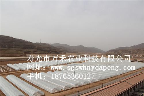 钢管拱棚建设-春秋拱棚建设-寿光市万禾农业