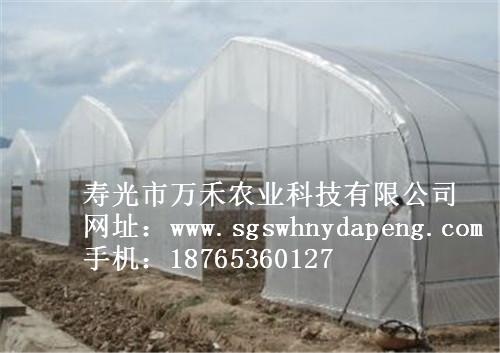 简易连栋拱棚-连体拱棚-寿光市万禾农业