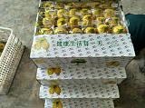 優質黃檸檬鮮果;