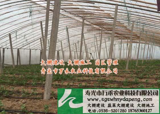 大棚建设-春秋大棚建设-寿光市万禾农业