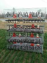 鴿籠廠家 兔籠廠家 雞籠廠家 雞鴿兔籠 狐貍籠 鵪鶉籠 雞籠;