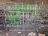 鸽子笼兔子笼鸡笼 狐狸笼鹌鹑笼鸟笼 鸡鸽兔笼养殖设备养殖笼具;
