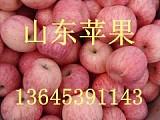 山東庫存紅富士蘋果批發價格山東蘋果產地;