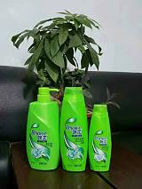 国产洗发水生产厂家供应飘柔全系列洗发水进货渠道