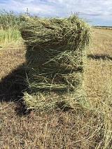 供应马场草料 东北羊草厂家 喂马的特级牧草 ;