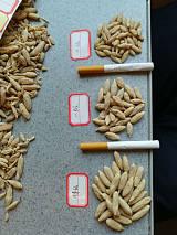 麦冬 是一种药用价值较高的中草药,具有养阴生津,润肺清心的功效!;