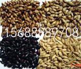 供应啤酒用大麦芽,澳麦芽,国产大麦芽,焦香麦芽,黑麦芽;