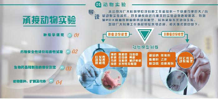 提供黑色素瘤动物模型构建服务 广州吉妮欧生物科技;