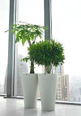 花卉、盆景、绿植、绿化施工养护。;