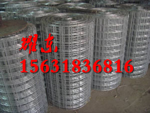 金属网焊接/不锈钢电焊网报价/201不锈钢电焊网;