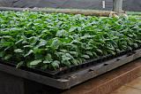 成都市绿康有机肥 育苗基质