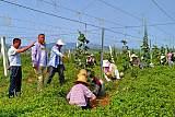 眉县批发大量优质专家指导红阳猕猴桃树苗