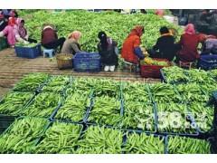 东莞长安石碣谢岗南城万江中堂蔬菜配送公司,提供送菜服务公司
