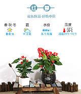 武汉办公室内植物盆栽租摆送货,武汉花卉租摆包维护和定期更换植物租赁;