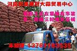 购优质大蒜到河南杞县黄村大蒜贸易中心