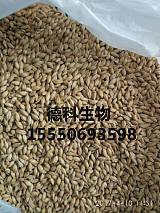 供应啤酒用大麦芽,小麦芽,澳麦,黑麦芽,焦香麦芽