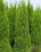 供甘肃绿化荒山苗木和陇南荒山绿化苗木哪家好