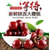 西安樱桃团购_樱桃批发_樱桃预售_苗木出售