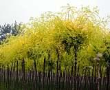 供甘肃苗木和陇南绿化苗木基地