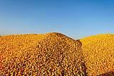 大型养殖场常年求购玉米碎米油糠麸皮次粉等饲料原料