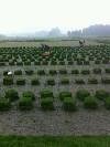 福州大地草皮有限公司;