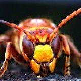 貴州晶森胡蜂養殖有限公司;
