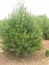泰安市綠廣園林綠化工程k8彩票官方網站
