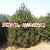 泰安市绿广园林绿化工程有限公司;