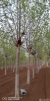 保定市浩宇园林绿化工程有限公司