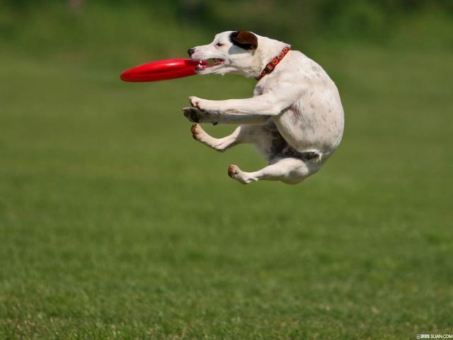 宠物新市场巨大年增长率逾30%,宠物过得比人还好