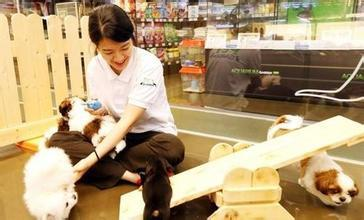 寵物新市場巨大年增長率逾30%,寵物過得比人還好