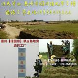 广东东莞深圳惠州马尼拉草坪草皮草卷草块基地批发泥培、暖季型、规定22cm